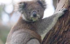 VIDEO: Australia Fires